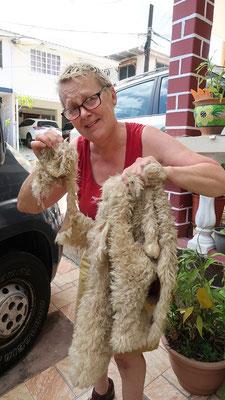 Auch mein Schaff-Fell aus Ushuaia hat es nicht überlebt :o(