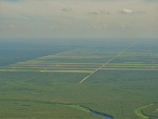 Die riesigen, abgeholzten Urwaldflächen