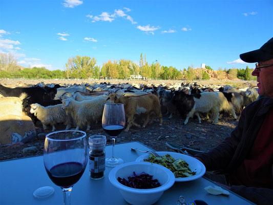 Die Ziegen werden zum Abtransport zusammengetrieben - nette Unterhaltung während dem Nachtessen ;o))