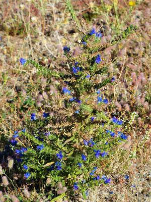 Die blaue Blume - Flor Azul