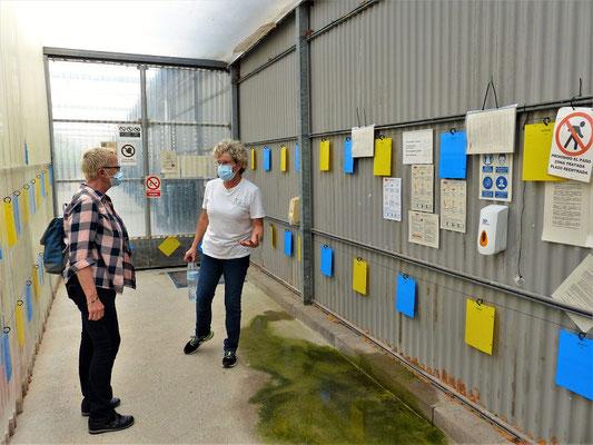 Eintritts-Schleuse ins Gewächshaus mit gelben und blauen Schädlingsfängern
