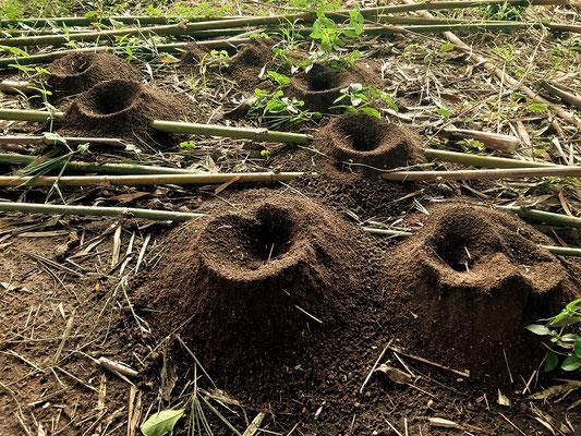 Die Vulkanlandschaft der Ameisen ;o)