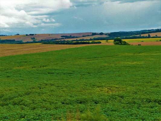 Abgerntete, neu bepflanzte und im Wachstum befindende Sojafelder so weit das Auge reicht
