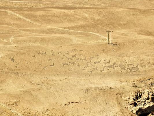 Geoglyphen von Tiliviche - Hirte mit Lamaherde