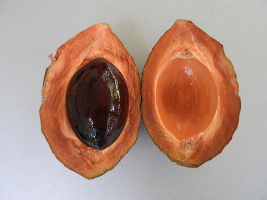 ....die Frucht schmeckt zwischen süsslich und Umami