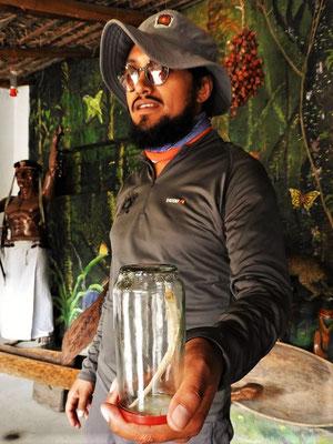 Der Pipi-Fisch liebt den Amoniak-Geruch und kriecht gerne in Harn-Blasen - also nie in den Amazonas pinkeln ;o))