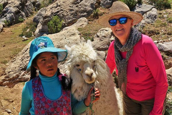 Ich finde diese Alpacas zum Knuddeln :o))