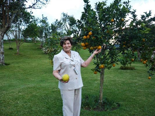 Tilcia mit ihren Orangenbäumen