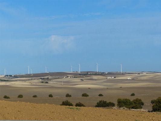 Die brachliegende Ackerlandschaft auf der Fahrt nach Cádiz