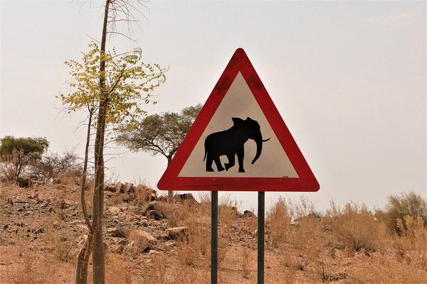 Achtung! Elefanten auf dem Weg zur Bull's Party