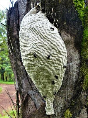 Auch die Wespen sind künstlerisch tätig ;o))