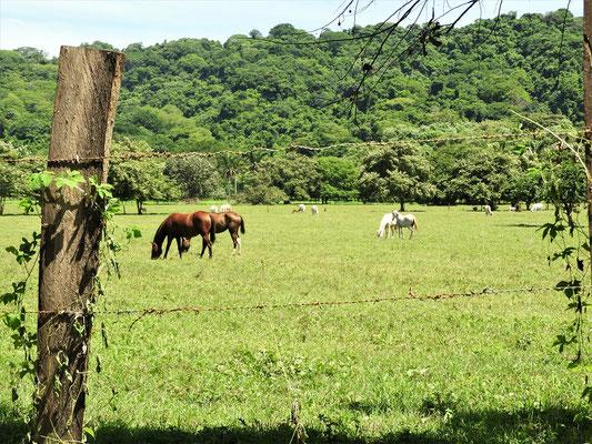 Auf der Halbinsel wird hauptsächlich Landwirtschaft betrieben