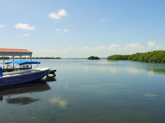 Im Boca del Río schwimmen Stachelrochen....