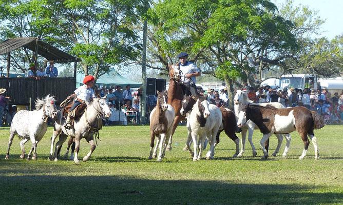 Dieser kleine Gaucho befehligt schon selbständig seine eigene Pony-Gruppe