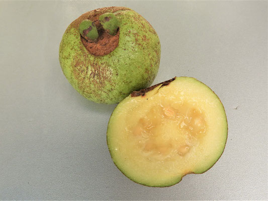....eine Guavenart, die hauptsächlich in Costa Rica vorkommt