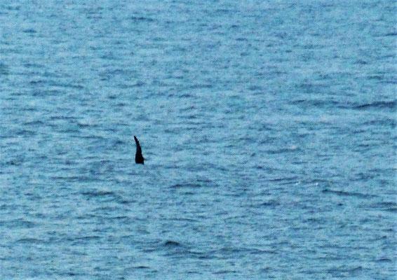 ....und ein Wal winkt uns zur Begrüssung ;o))