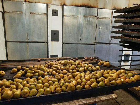 Die frischen Birnen warten auf den ersten Dörrgang