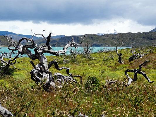 Vom Wind leer gefegte Bäume