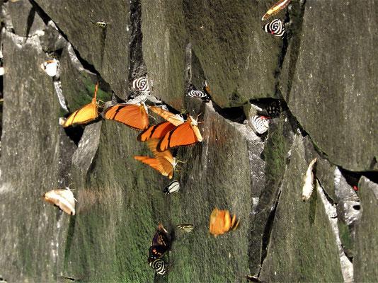 Überall fliegen Schmetterlinge....