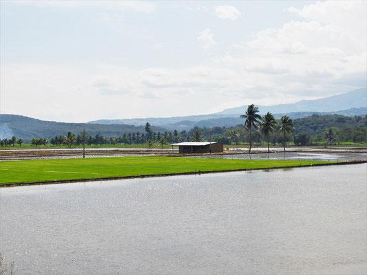 Die ersten Reisfelder....