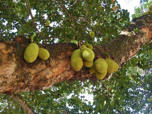Jack-Frucht