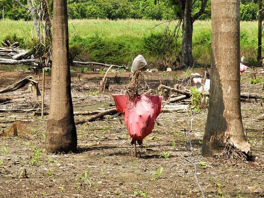 ....mit karibischer Vogelscheuche....