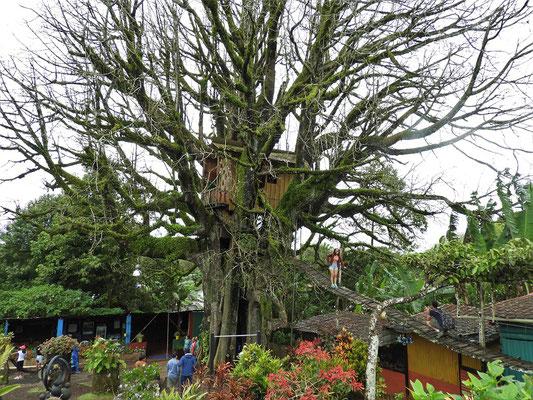 Baumhaus in 300 Jahre altem Ceibo-Baum