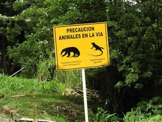 ....Ameisenbären und Iguanas....