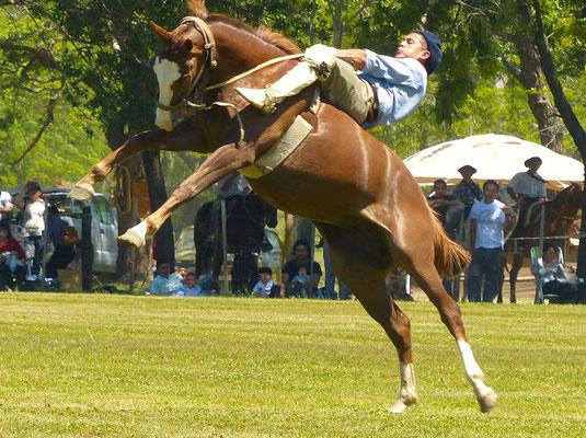 Das Rodeo geht los!
