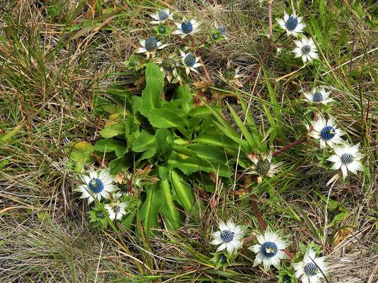 Auch in dieser kargen Landschaft blühen vereinzelt Blumen
