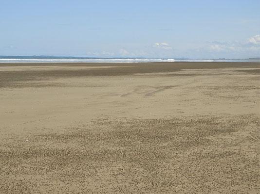 ....diese unzähligen Sandkegel verursachen die dunklen Flecken am Strand