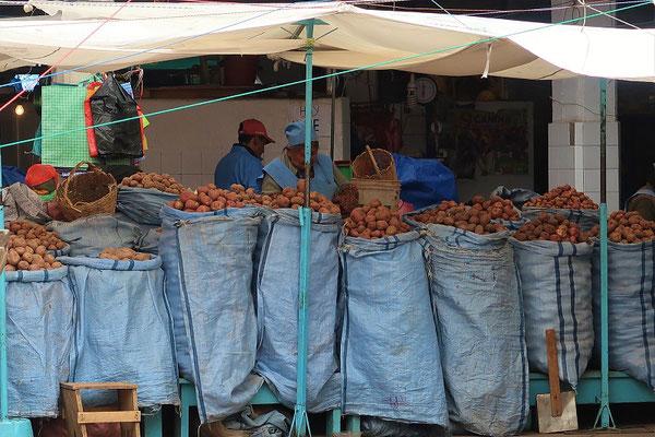In Bolivien gibt es mehrere hundert verschiedene Sorten Kartoffeln