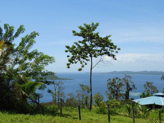 Erster Blick auf die Karibik