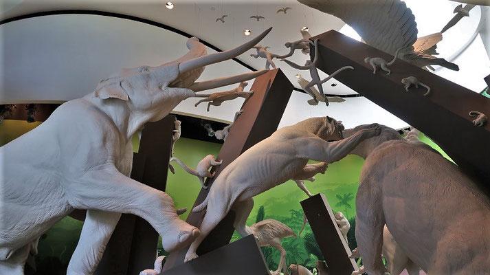 Säugetiere, die von Norden oder Süden die Landverbindung überquerten....