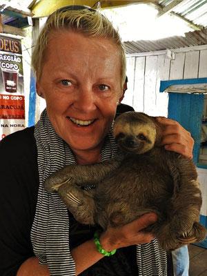 Faultier - das Haustier der Indios