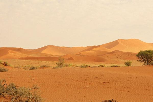 Die ersten Dünen