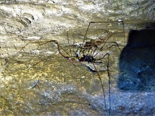 Höhlenbewohner