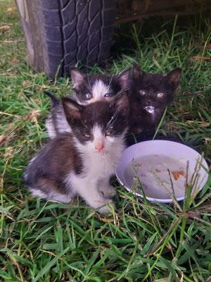 Unsere Adoptiv-Babies für drei Tage