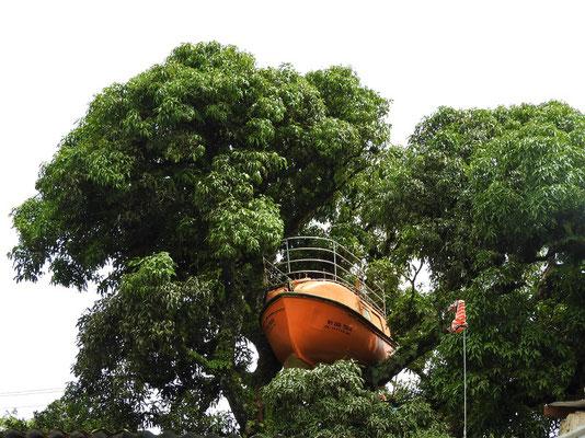 Rettungsboot auf dem Mango-Baum
