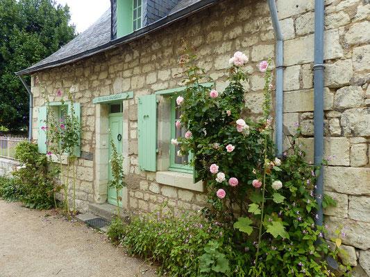 Das Loire-Tal ist berühmt für seine Rosen-Stöcke