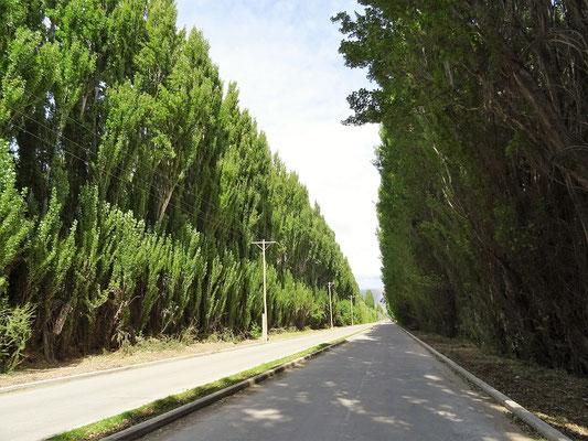 Grosse Bäume schützen vor dem starken Wind....