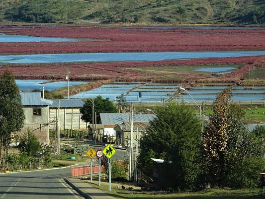 An der Laguna de Cahuil - aber keine Salzfelder....