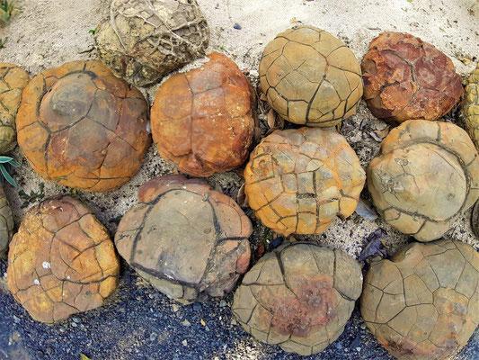 Interessante Steine am Wegesrand