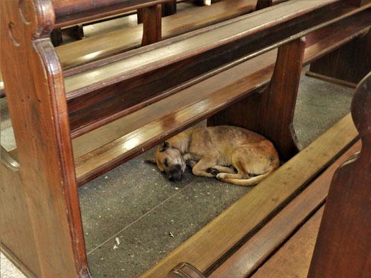 Auch Hunde haben hier Zutritt zur Basilika :o))