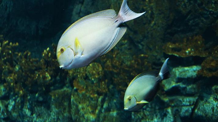 Fische in karibischem Gewässer....