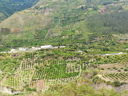 Plantagen an den sehr steilen Hängen