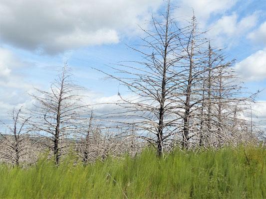 Grosse Teile der Landschaft waren Opfer eines Feuers