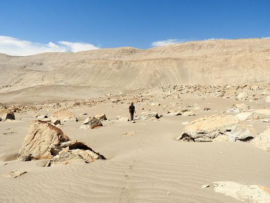 Röbä auf der Suche nach Petroglyphen auf diesem riesigen Lavastein-Feld