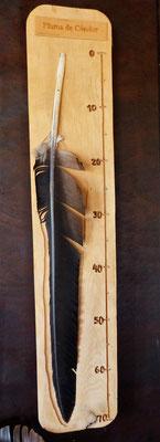 Feder eines Kondors - 70cm
