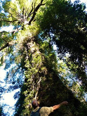 'Larch' - Baum - ist geschützt und ein nationales Denkmal